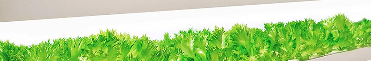 Horticulture LED lighting guide