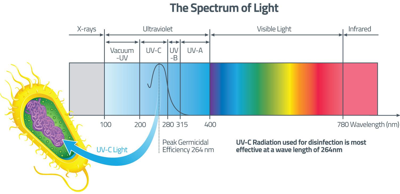 UV radiation spectrum UVA, UVB and UVC